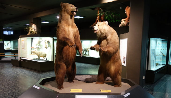 zoomuseum