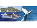 Star of Honolulu- Early Bird Whale Watch Cruise for 4 adults