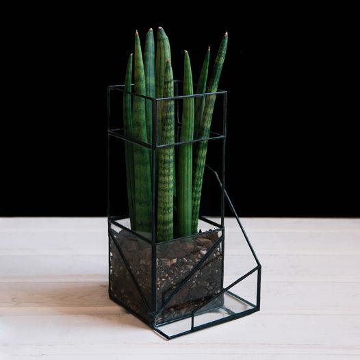 Стеклянное кашпо с растением BEIRA SANSA