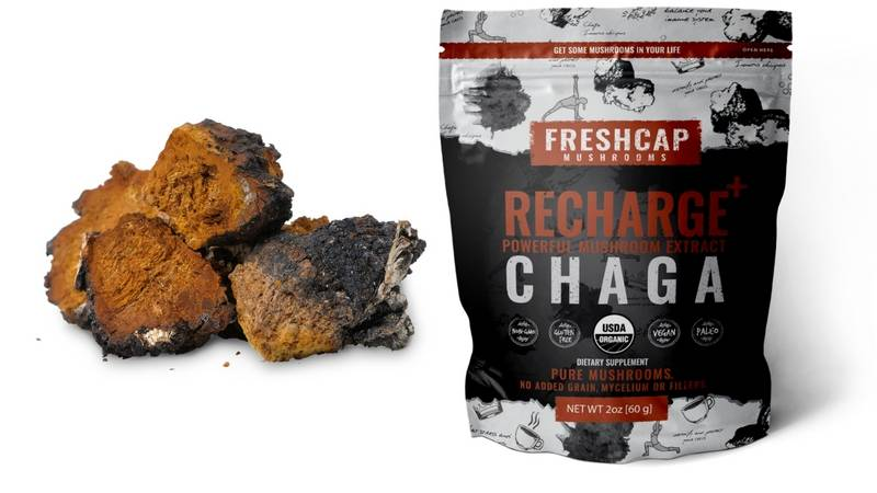 Chaga – FreshCap Mushrooms