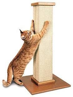 A good cat scratching post