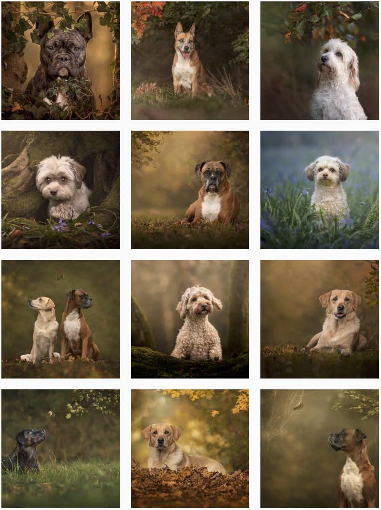 How to create fine art dog photography