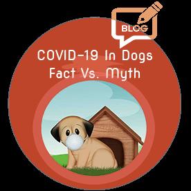 crayolex-cbd-hemp-coronavirus-dog