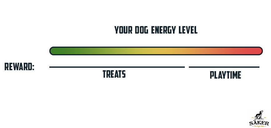 dog energy levels