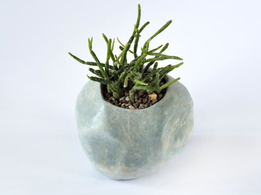 Рипсалис в каменном яйце
