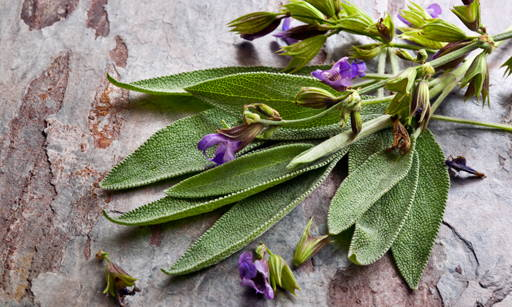 Xeradin An active complex of natural origin, contains clary sage extract. It belongs.