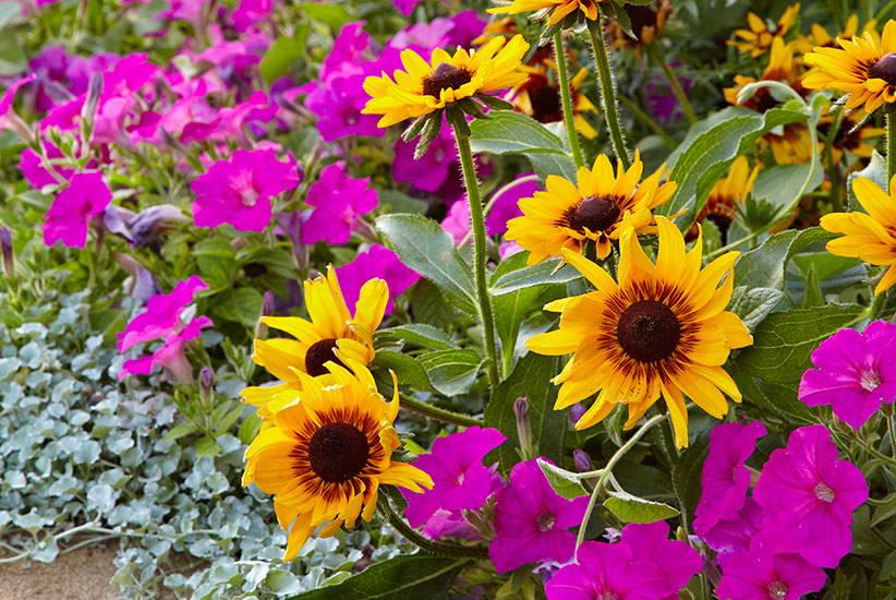 mixture of flowers
