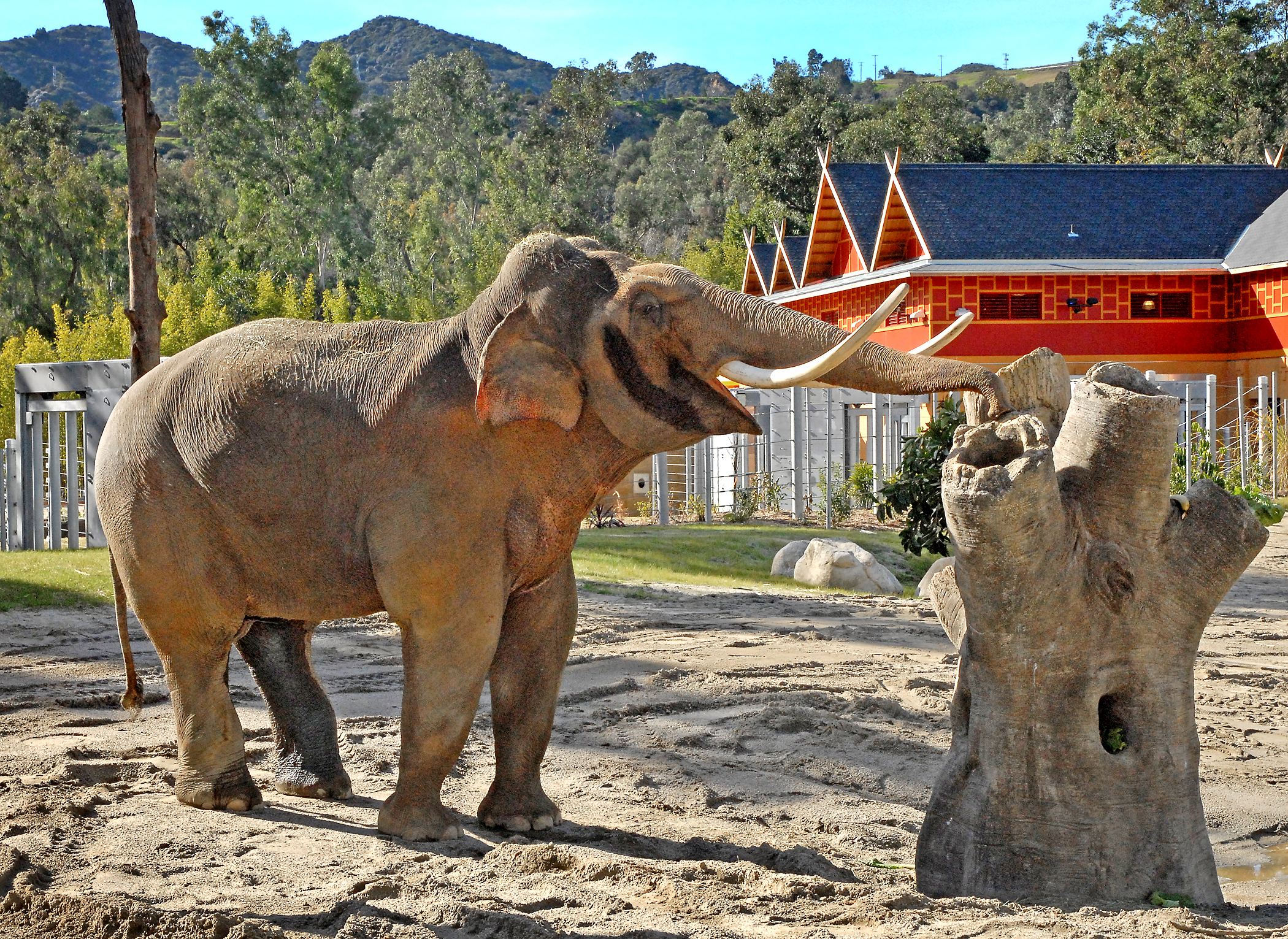Greater Los Angeles Zoo Association: Sign_up