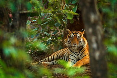 Golden Triangle With Ranthambore PRIVATE TOUR