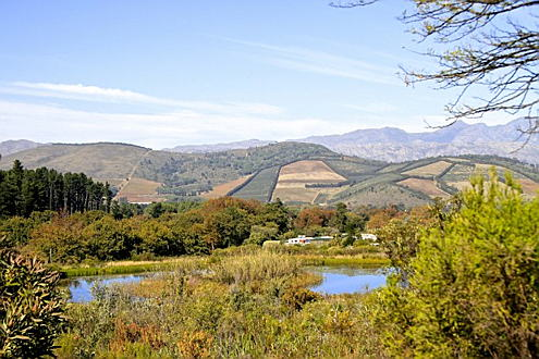 South Africa - The Friends of the Helderberg Nature Reserve is situated in Somerset West on the slopes of the beautiful Helderberg Mountain overlooking False Bay, Teeming with life, it's a perfect exploring ground for young and old and offers a true break-away from the city rush. https://helderbergnaturereserve.co.za/
