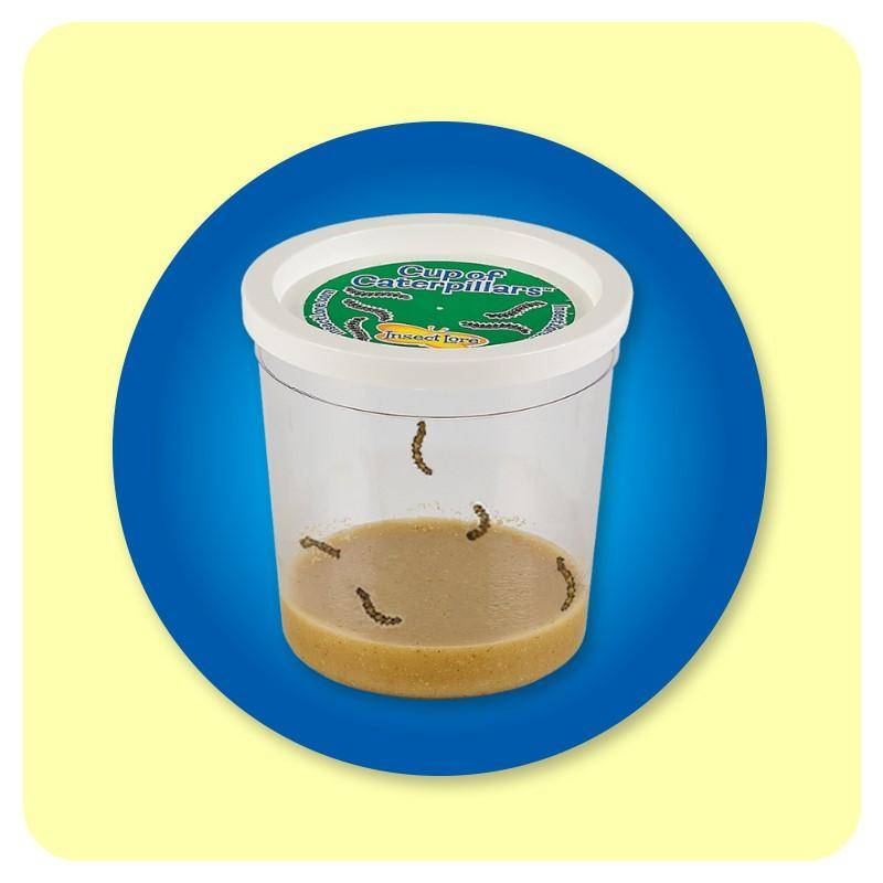 Cup of Caterpillars