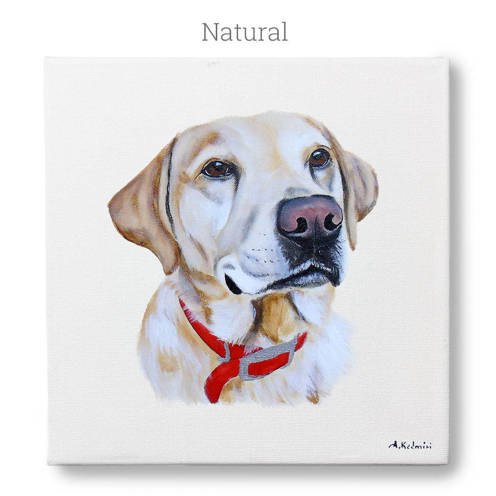dog portrait - colors
