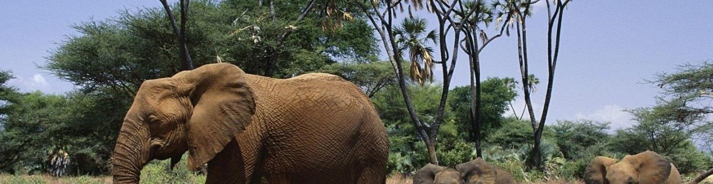 Катание на слонах для детей и взрослых