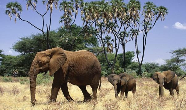 Катание на слонах, обезьяны и кулинарное шоу
