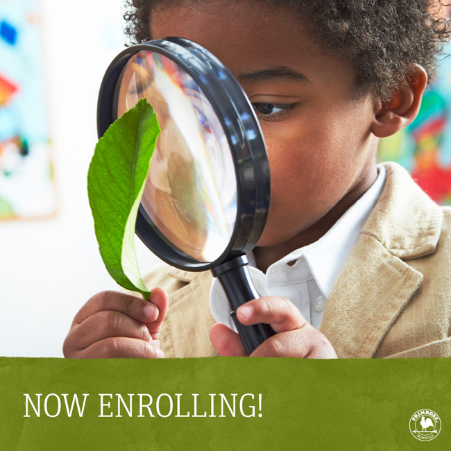 Now enrolling poster featuring a young Primrose student looking at a leaf through a magnifying glass