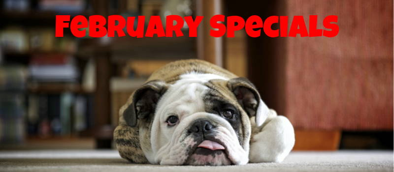 January 2019 Monthly Specials