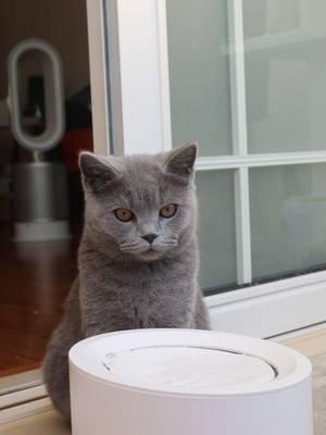 Petree Intelligent Cat Water Dispenser
