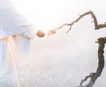Jesus hand touching a dead branch, causing it to blossom.