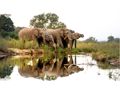 Once in a Lifetime Luxury South African Safari with Singita, Johannesburg & Cape Town for Two