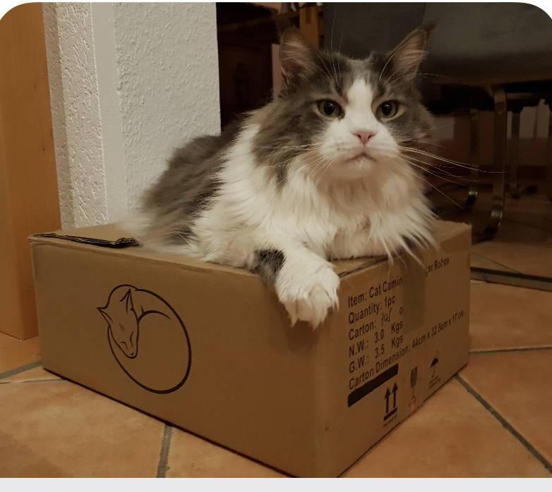 CAT CAMINO® macht Katzen glücklich
