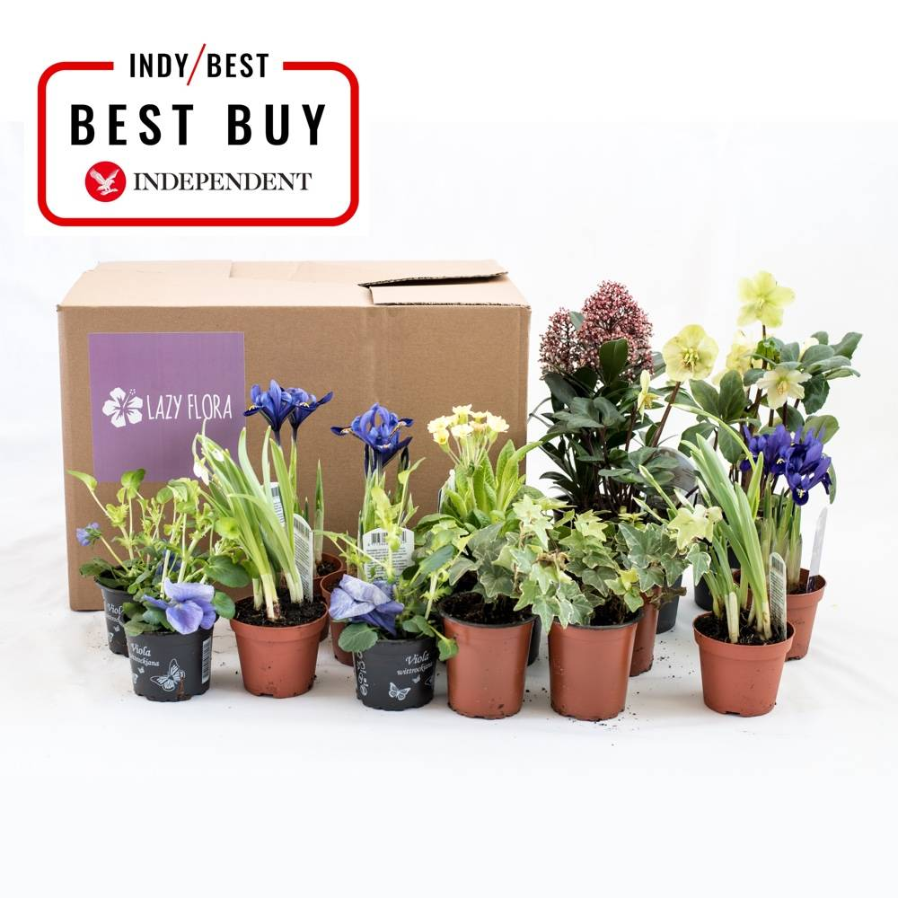IndyBest Best Buy plant and gardening subscription boxes