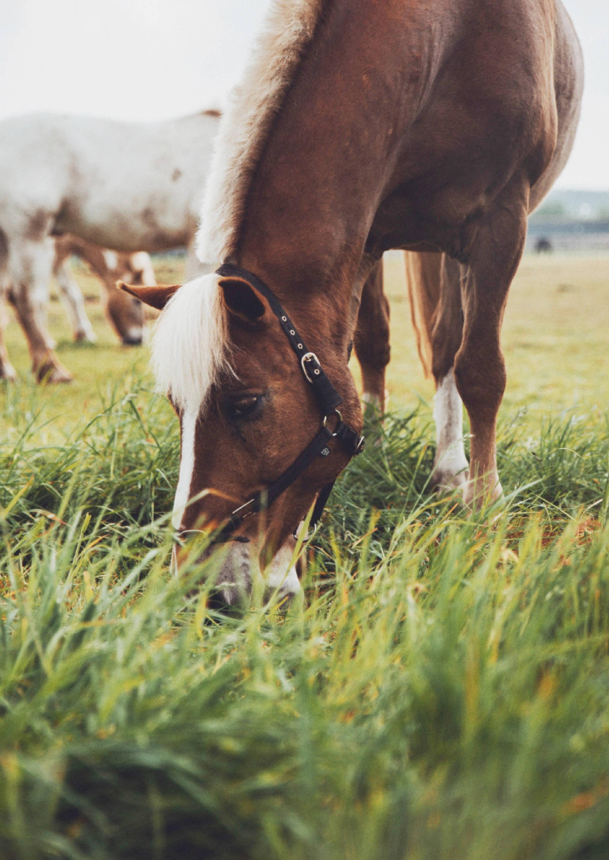 brown horse grazing in fresh grass