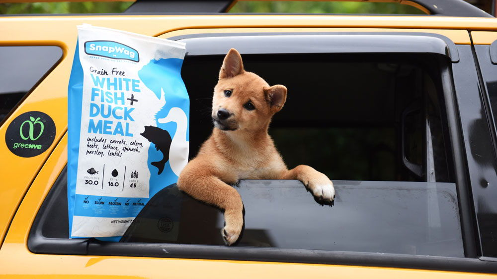 Dog Food for Puppies - New York - Shiba Inu
