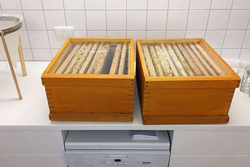 Zwei Zargen mit Rähmchen voller Honig die darauf warten entdecket zu werden.