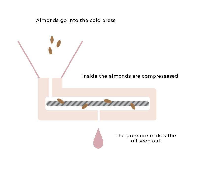Almond oil cold press procedure illustration