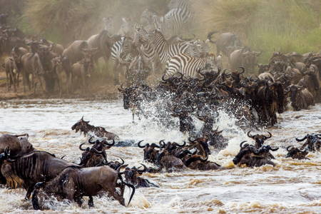 4 Days Masai Mara Safari in High Season