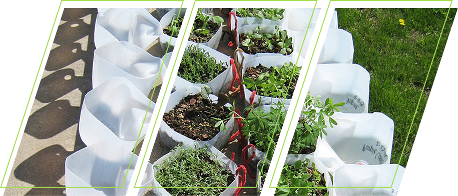 Different kinds of plants in a plastic container
