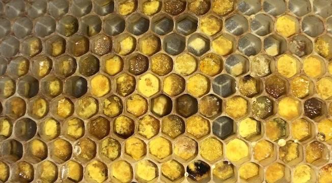 Blick auf eine Wabe mit Pollen