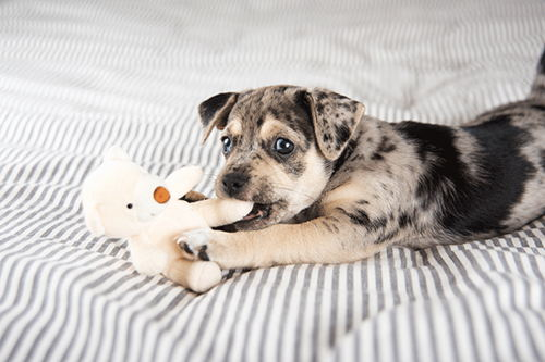 Image for New Puppy Needs Attention