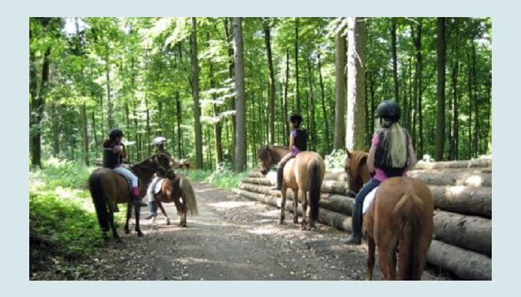 ponnyland reiten auf waldweg