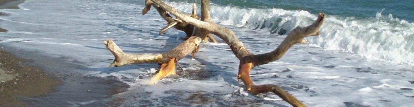 Пляж BACONAO, Крокодиловая Ферма,  Музей Старинных Машин