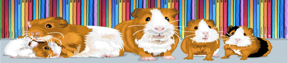 Guinea Pig  Education