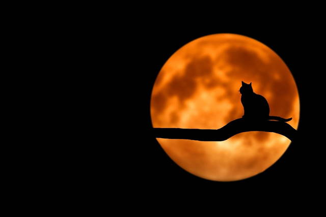 In front of the moon, a cat was sitting on a branch