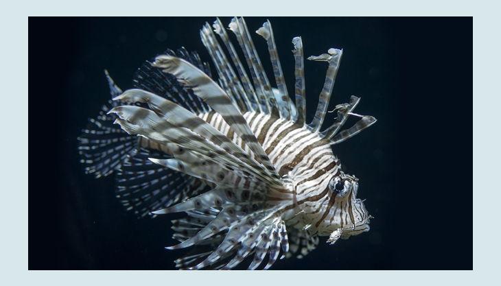 zoologischer garten berlin feuerfisch