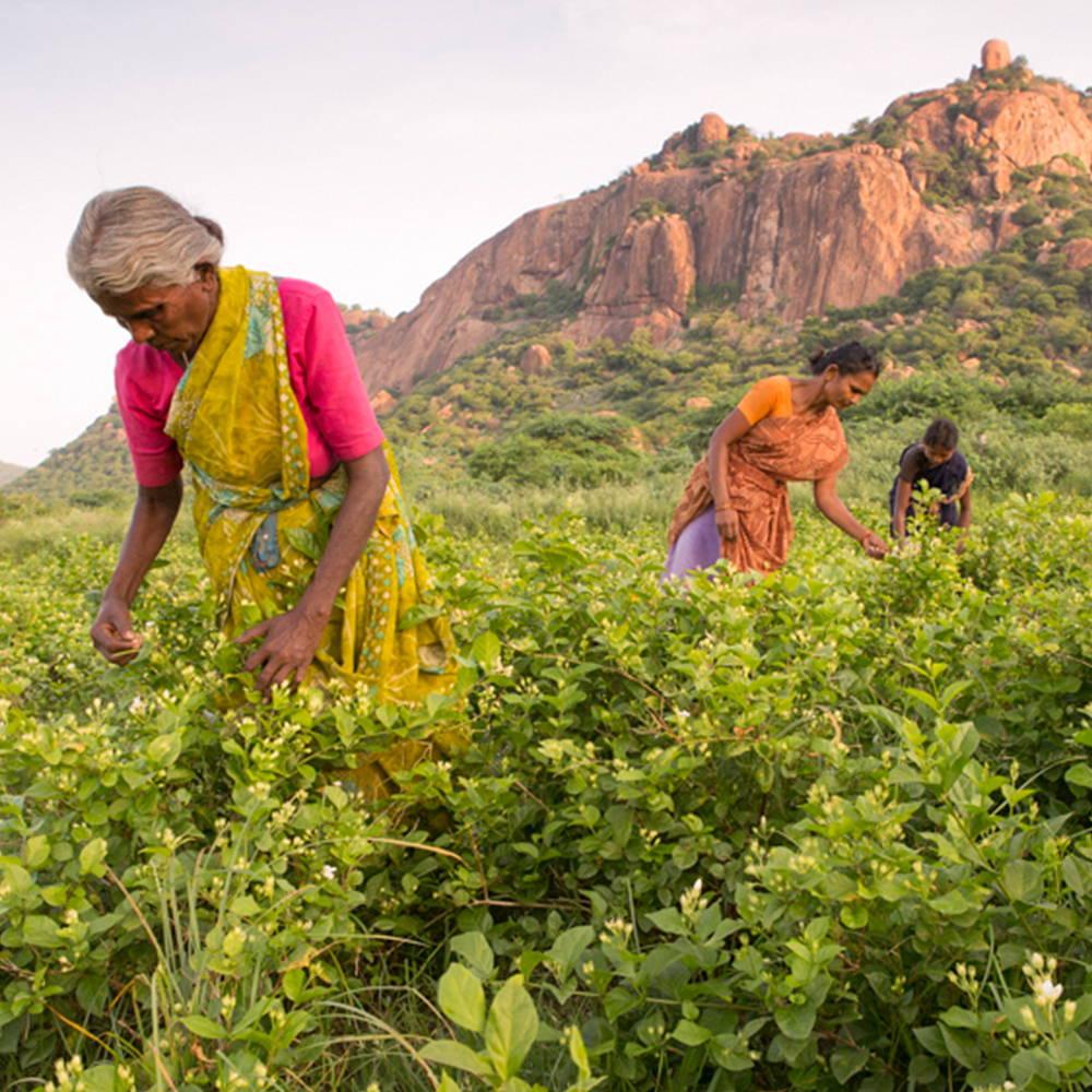 Three farmers tending the field
