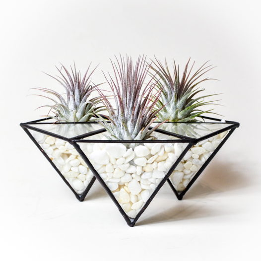 Флорариум с тилландсиями Тринити