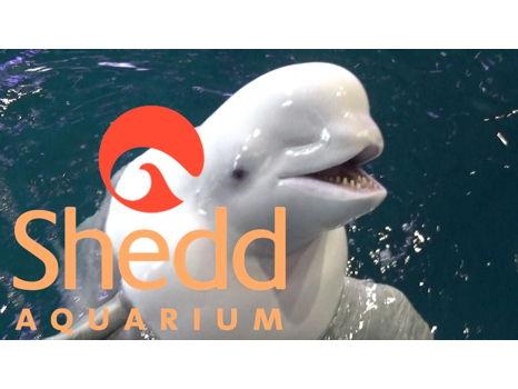 4 tickets for the Shedd Aquarium