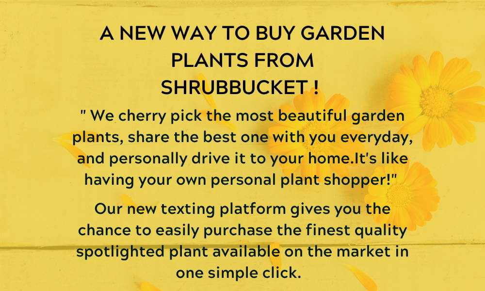 "A NEW WAY TO BUY GARDEN PLANTS FROM SHRUBBUCKET  "" We cherry pick the most beautiful garden plants and share the best one with you everyday. Our new texting platform gives you the chance to  easily purchase a spotlighted plant.  It's like having your own personal plant shopper!"""