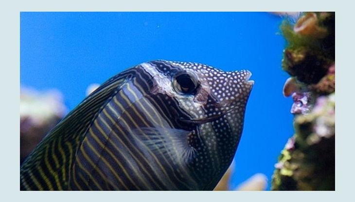 biosphäre potsdam fische