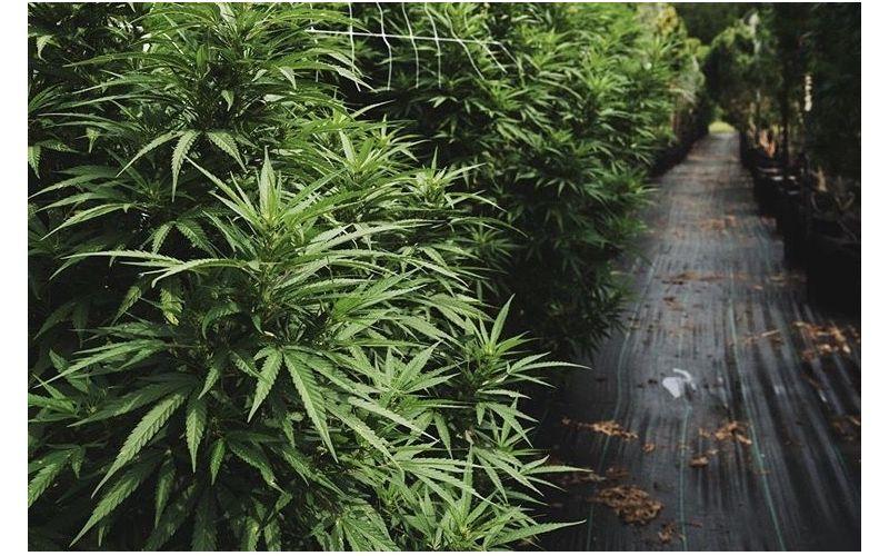 The Agenda: SC inches toward hate crime law; cannabis farmers see bright future