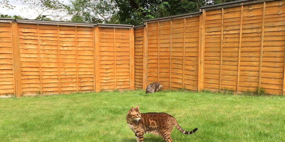 Cat-proof fence paddle kits by Oscillot: Cat Fence, Cat proof fence, Cat fence rollers, Cat Fence topper, cat containment system, Oscillot cat fence, Cat containment fence, Cat proof fence topper, Outdoor Cats,