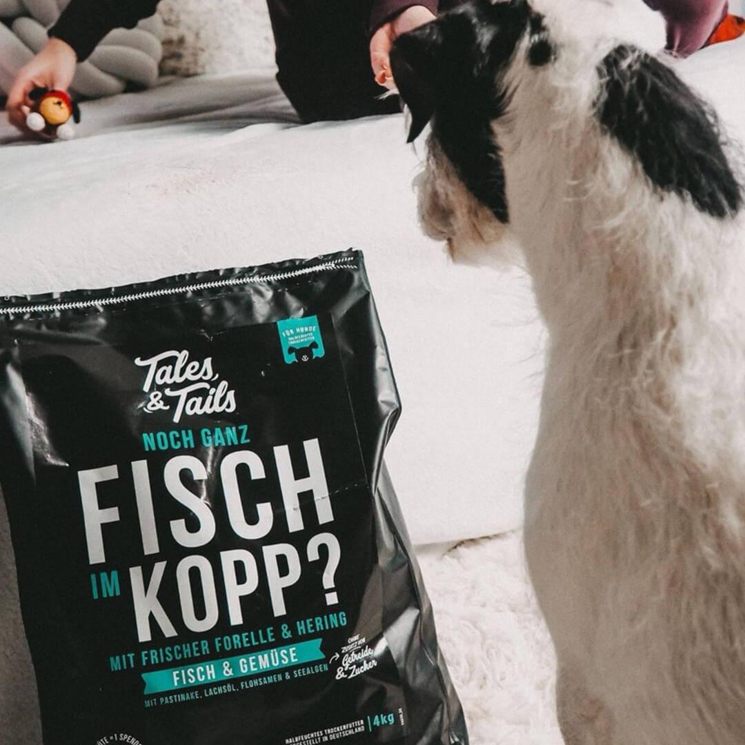 Noch ganz Fisch im Kopp Trockenfutter für Hunde
