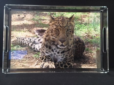 Acrylic Serving Tray with Photo of Anthony Leopard
