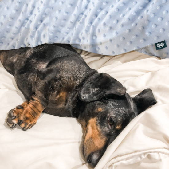 Sensory minky weighted blanket for a small dog