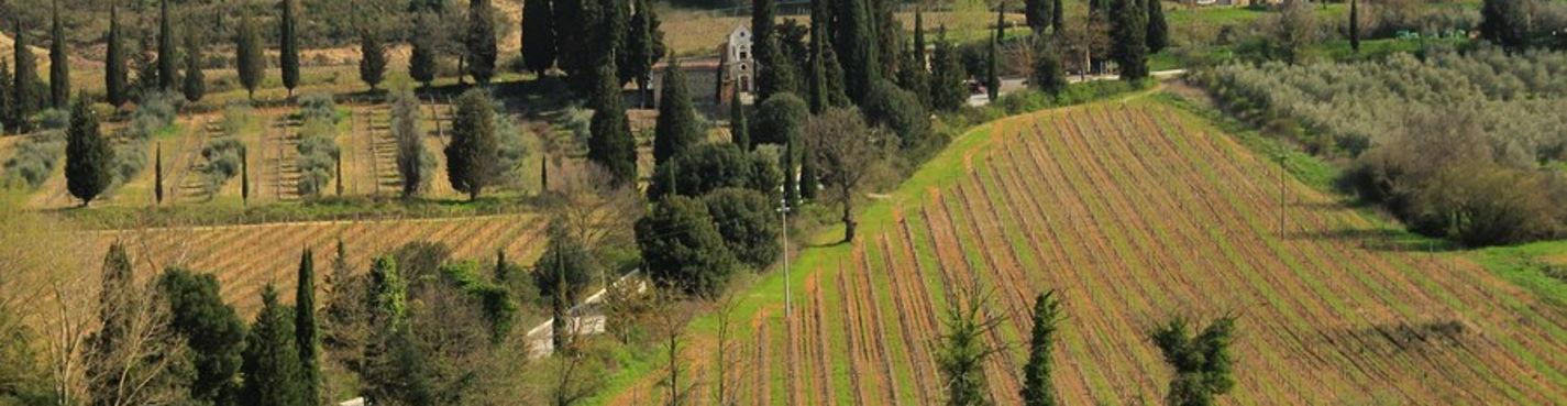 Между виноградников Брунелло затеряных где то в Тоскане.
