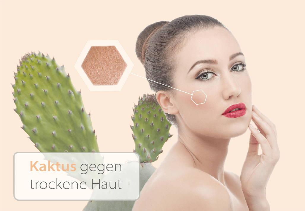 Kaktussalbe gegen trockene Haut